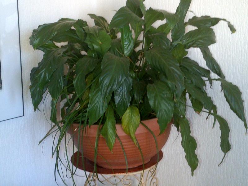 Identification pour deux plantes svp Img-2010