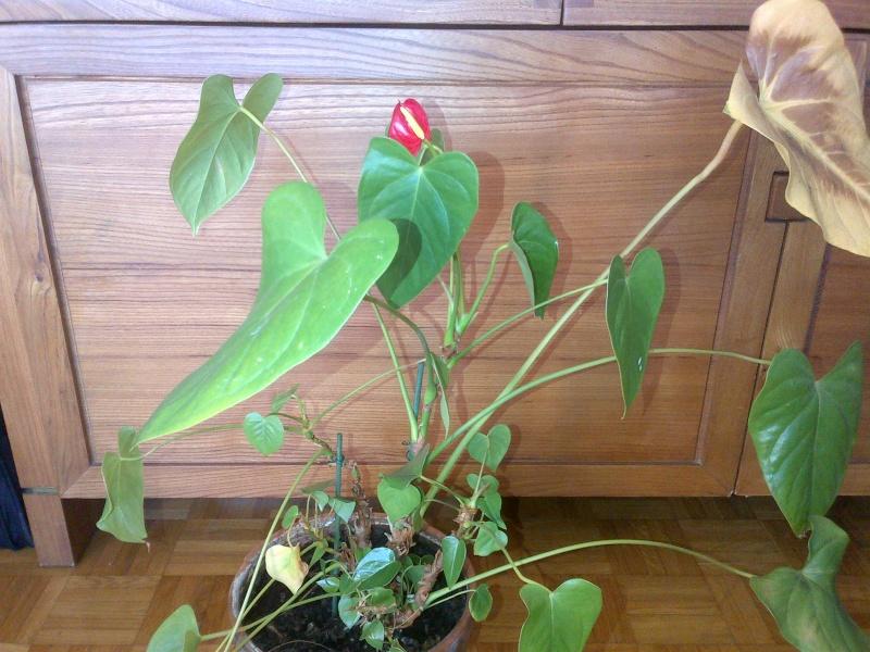 Identification pour deux plantes svp Img-2011
