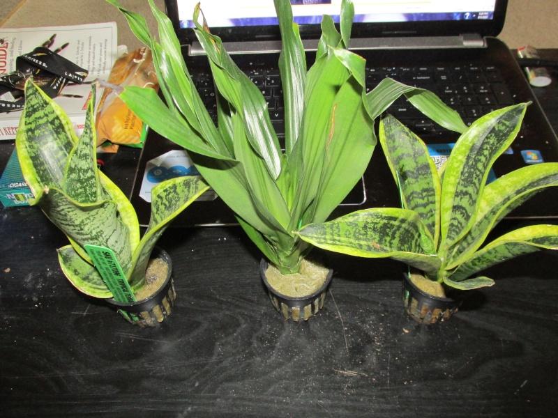 scorpion tank plants and lighting .....question... 001_310