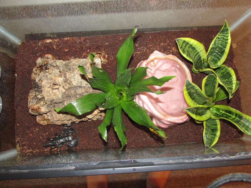 scorpion tank plants and lighting .....question... 00310
