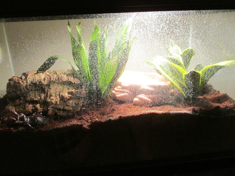 scorpion tank plants and lighting .....question... 004_410