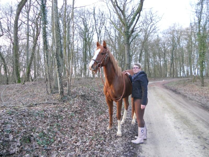 CONCOURS PHOTOS : Chevaux et nature.... - Page 2 Dscn6010