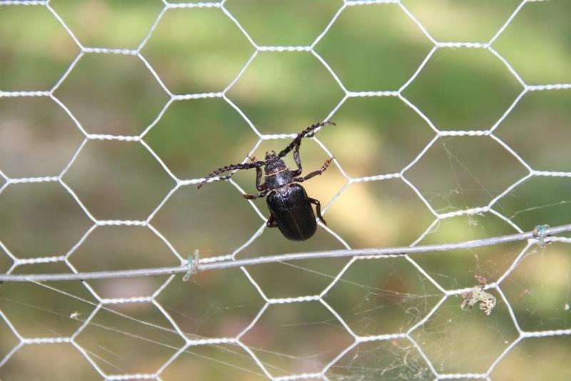 Mais qu'est ce que c'est ?? Insect10