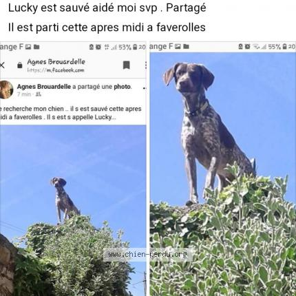 PERDU LUCKY à Faverolles 02600.....RETROUVE Lucky_10