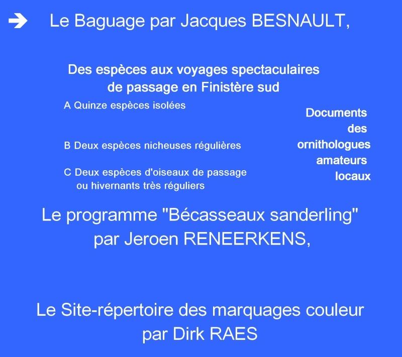 Conférence-débat : Oiseaux de passage sur le littoral du Pays Bigouden - Loctudy le 8 septembre 2012 à 20h 5a_e9_10