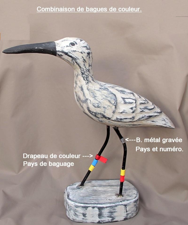 Conférence-débat : Oiseaux de passage sur le littoral du Pays Bigouden - Loctudy le 8 septembre 2012 à 20h Combin10