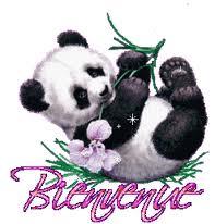 Présentation de Titeplume Panda10