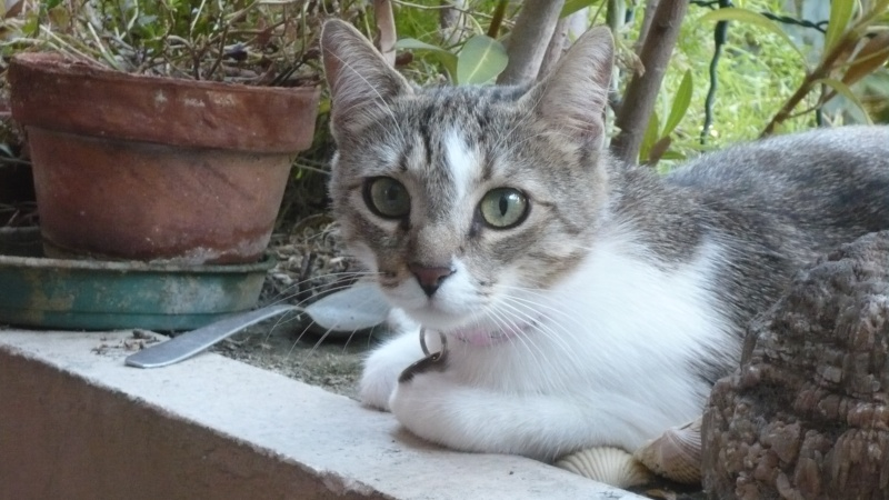 Chloé est adoptée ! P1020315