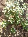 Name that plant!  12081913