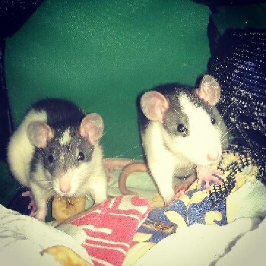 Cookie et Speedy, les ptits husky Img_2013