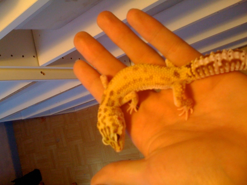 Mes geckos . Img_0817