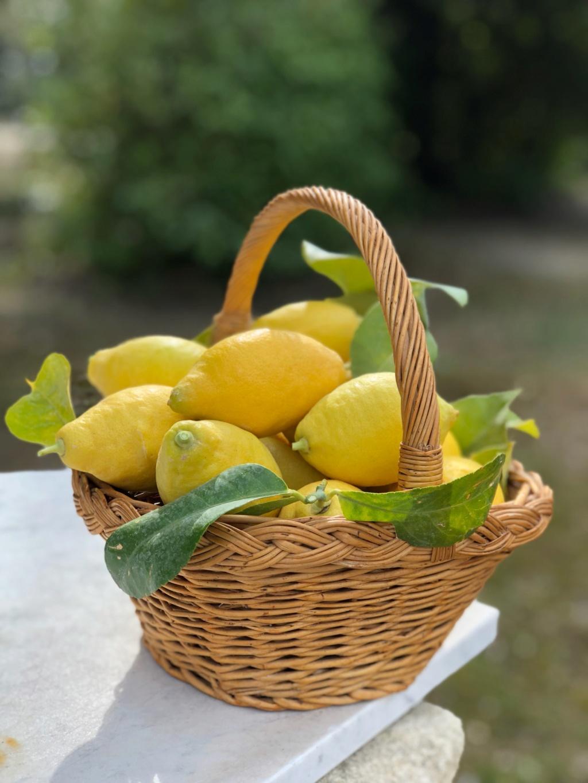 [Conservation] Citrons confits dans l'huile Img_8410