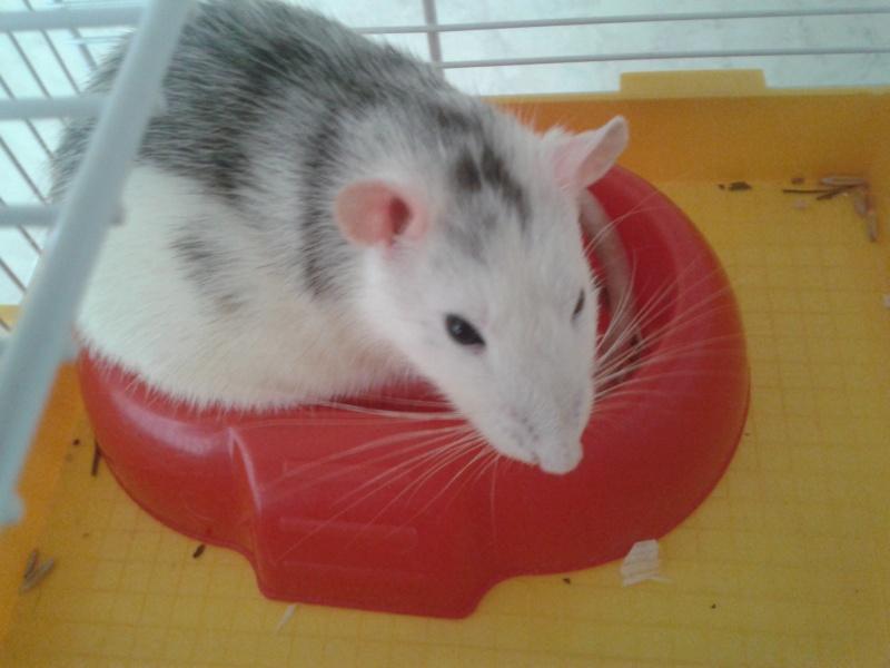 Nos 5 ratounes =) 2011-010