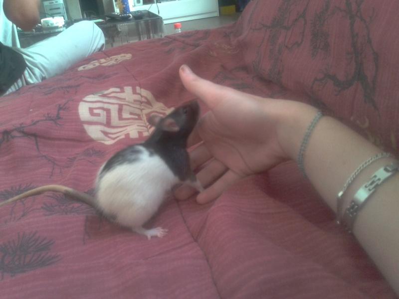 Nos 5 ratounes =) 2011-110