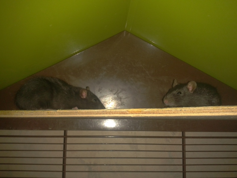 Nos 5 ratounes =) 2012-010