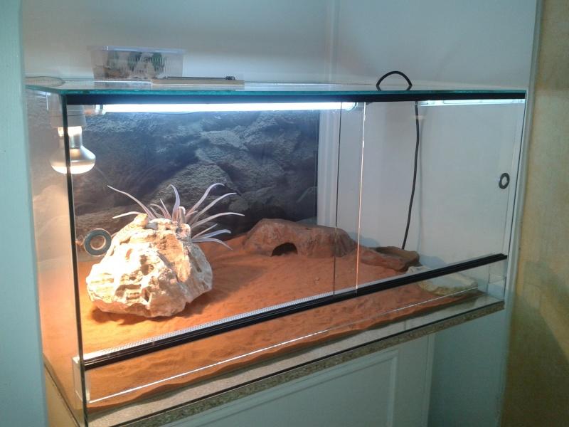 avis sur mon 1er terrarium 2012-014