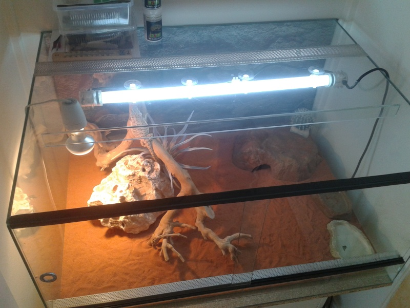 avis sur mon 1er terrarium 2012-111