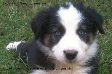 BLANC - BC noir et blanc aux yeux bleus Jpeg10