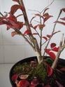 mon premier projet et aussi premier arbre^^ Dscf1213