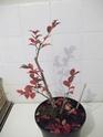 mon premier projet et aussi premier arbre^^ Dscf1218