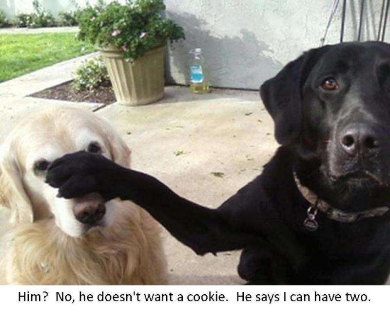 chiens anxieux et très stressés....où mes mesaventures avec bidule .... - Page 5 53601310