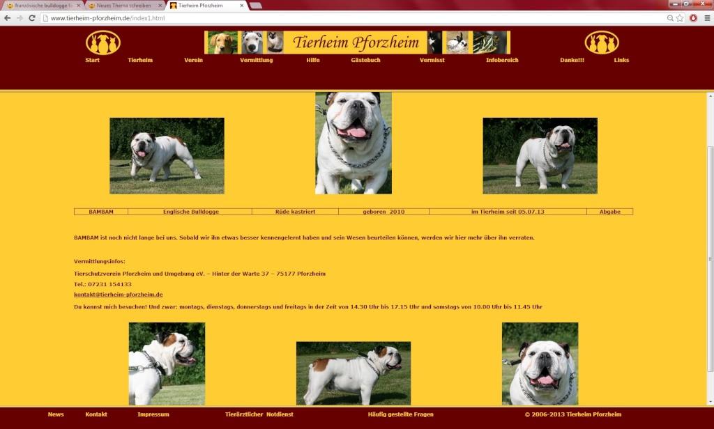 Bambam Englische Bulldogge Bambam11
