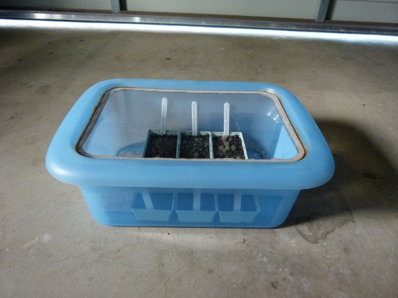 Winter Seedling Help P1010910
