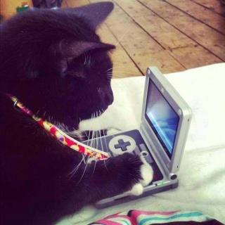 Chat alors! - Page 5 10165910