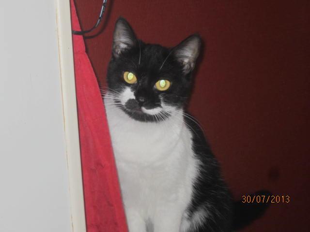 Lolita -  noire et blanche née en 2012 Img_5010