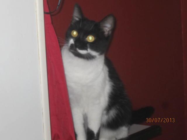 Lolita -  noire et blanche née en 2012 Img_5011