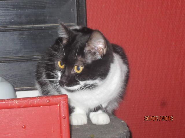 Lolita -  noire et blanche née en 2012 Img_5012