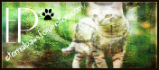 Roleplay-Warrior Cats - Portal Images10