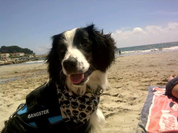 Vos chiens et leurs harnais! Photo  - Page 3 10005210
