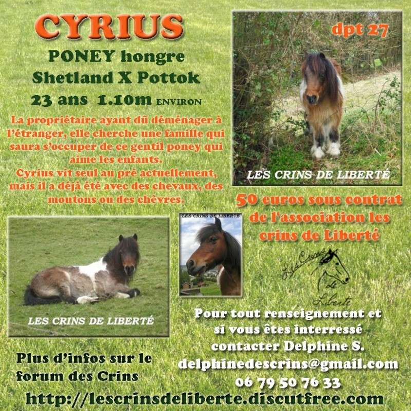 Dpt 27 - CYRIUS Shetland X Pottok 23 ans sauvé par Loooxa (oct2013) - Page 4 Cyrius11