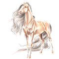♪ Quel cheval es-tu ? - Page 3 Bella10