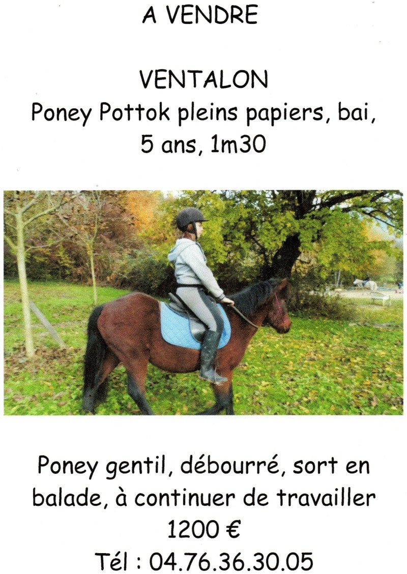 vends poney Img27410