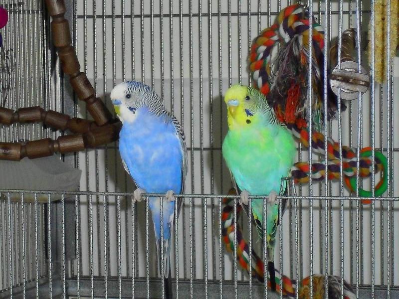 Pépille et Bleuet Cimg2314