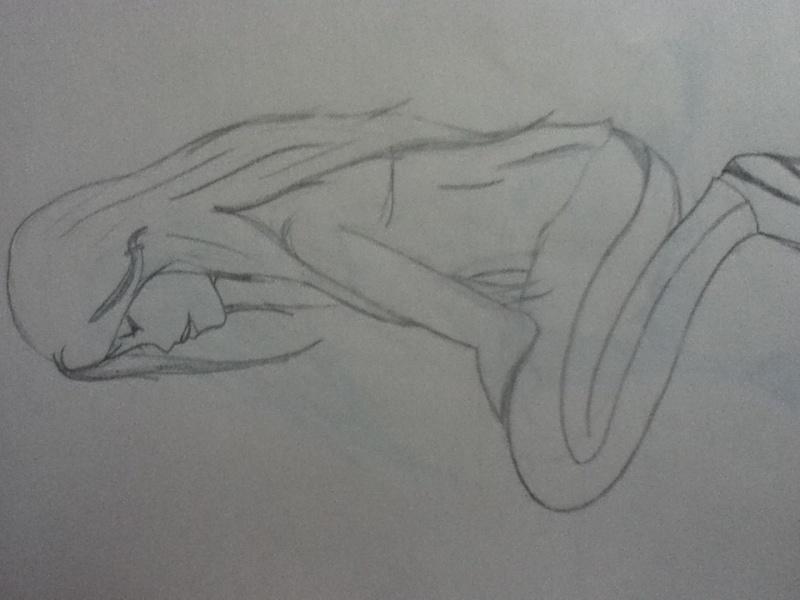 mes dessins :)  Photo_13