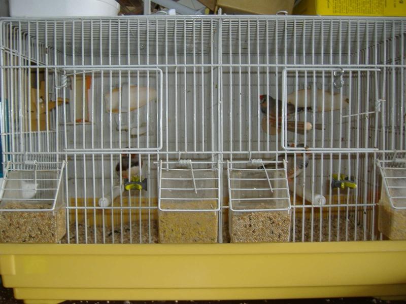 ma cage de reprodution Cage_d15