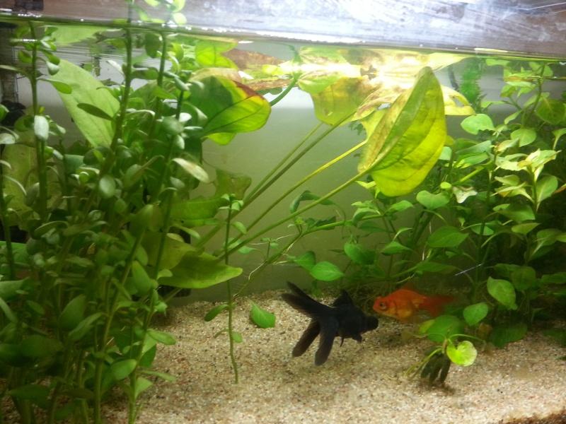 plante dans un aquarium 20130712