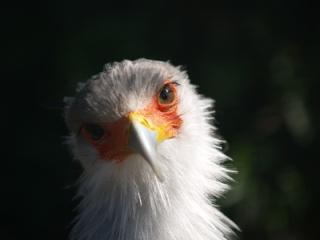 Die Geschichte vom jungen Adler, der als Huhn aufwuchs Dieter11