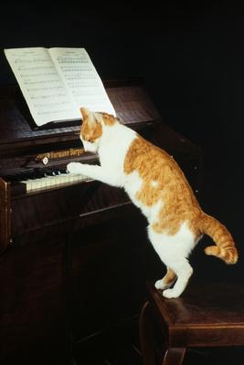 Die Katze als Doktor und Therapeut Juerge10