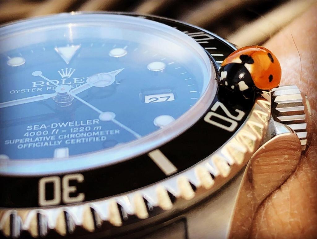 Votre montre du jour - Page 2 Bbfe1110