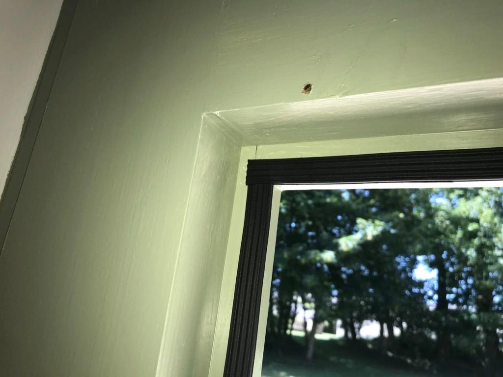 Porte d'entrée vitrée avec  grand cadre - Page 7 Img_4326
