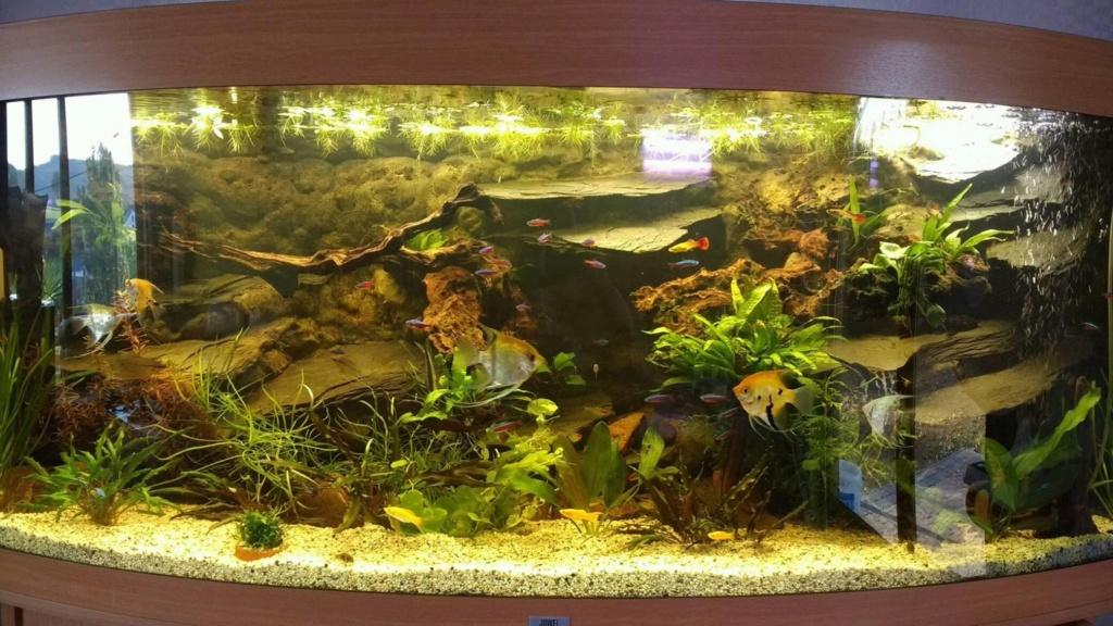 Déménagement + revenir à un aquarium classique 14138810