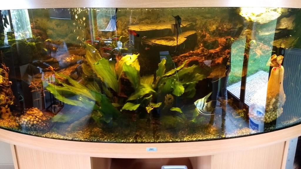 Déménagement + revenir à un aquarium classique Img_2010