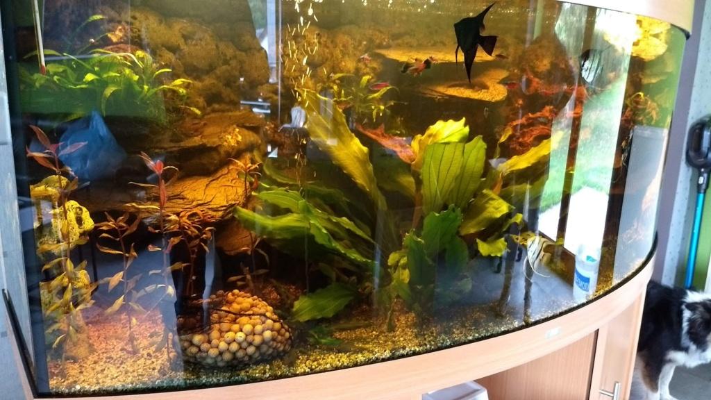 Déménagement + revenir à un aquarium classique Img_2011
