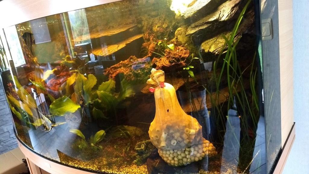 Déménagement + revenir à un aquarium classique Img_2012
