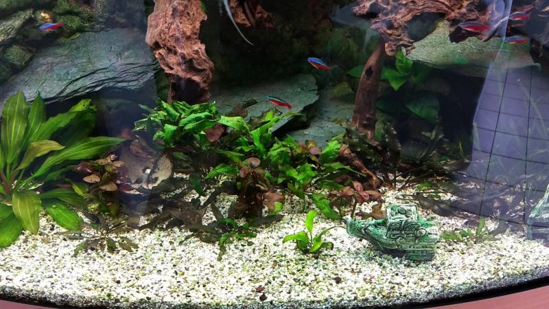Mes plantes sont amorphes, et peu vivantes :-( Img_2014