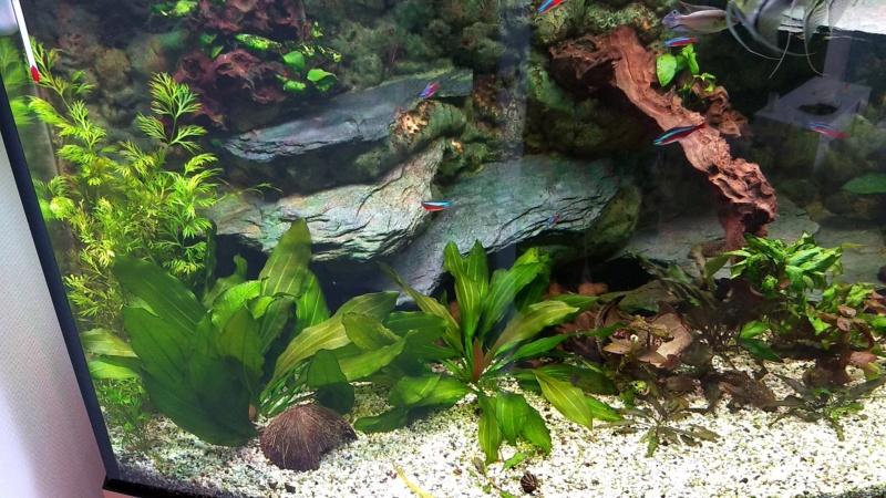 Mes plantes sont amorphes, et peu vivantes :-( Img_2015